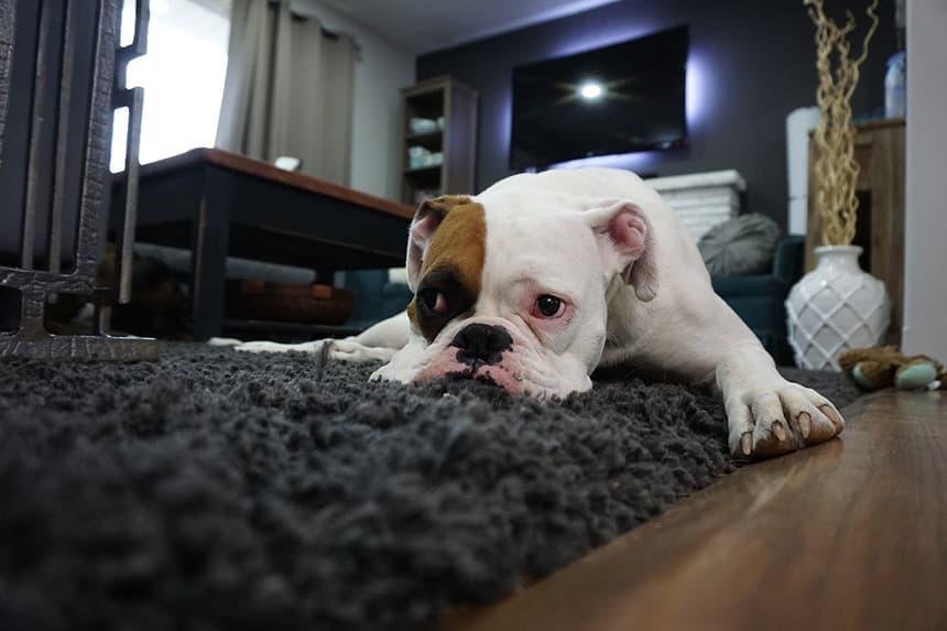 Чистка ковров от шерсти и мочи животных.